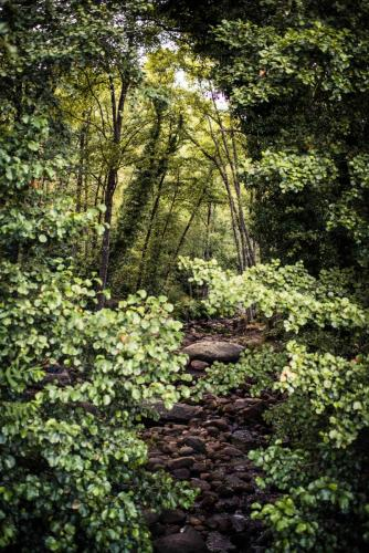 Paseo por el entorno de Jarandilla de la Vera